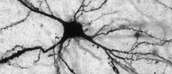 کمبود یک مولکول در خون در بروز افسردگی تاثیر دارد